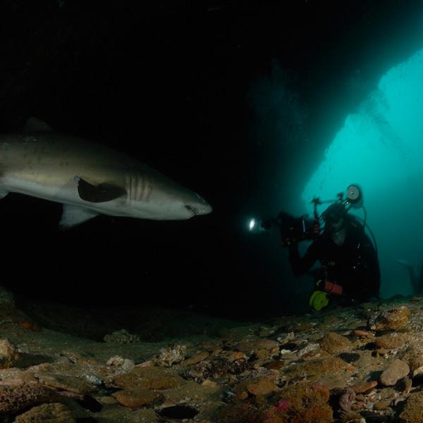 shark-diving-aliwal-shoal1