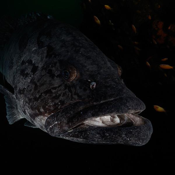 shark-diving-aliwal-shoal2