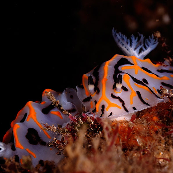 greatest-shoal-diving-1