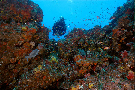 greatest-shoal-diving-5