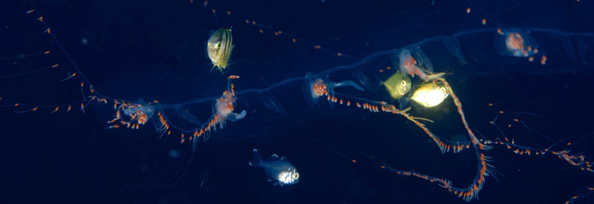 sardine-run-shark-diving-adventures-contact