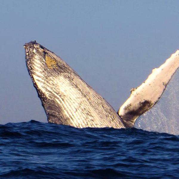 sardine-run-wild-coast-1